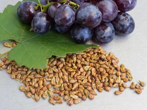 Польза и применение виноградных косточек в косметологии
