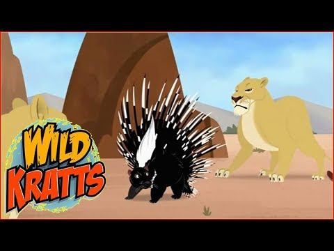 ► Wild Kratts HD - Quillber's Birthday Present - Wild Kratts Full Episodes in English