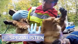 Junge (12) geht Gassi - Hund kommt blutverschmiert allein zurück | Die Spezialisten | SAT.1 TV