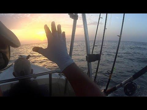 Mixed Bag of Fish-full video