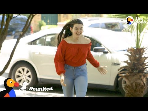 download Dogs are THRILLED to be Reunited With Sister Coming Home From College | The Dodo Reunited