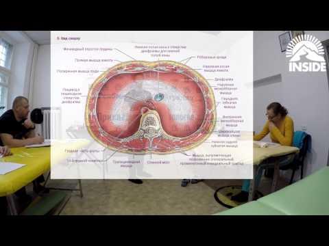 Грыжа пищеводного отверстия диафрагмы - причины, симптомы