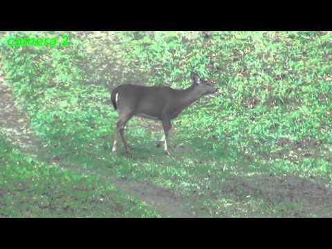 170+ Yard Muzzleloader Deer Perfect Kill Shot