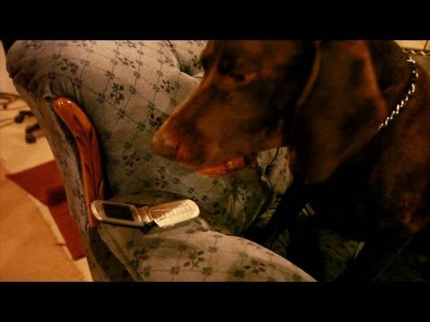 CHARLIE THE DOG CAN TALK!!! TALKING ANIMALS ULTIMATE DOG TEASE