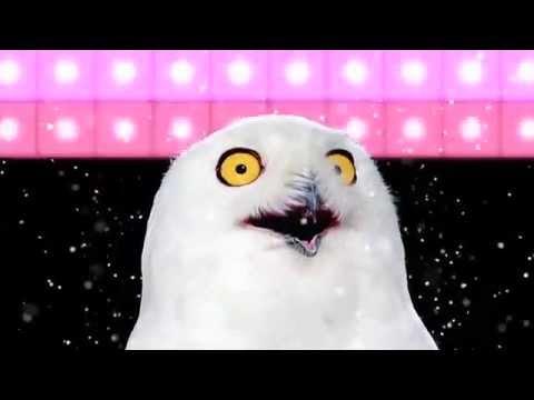 видео белая сова смеется видео