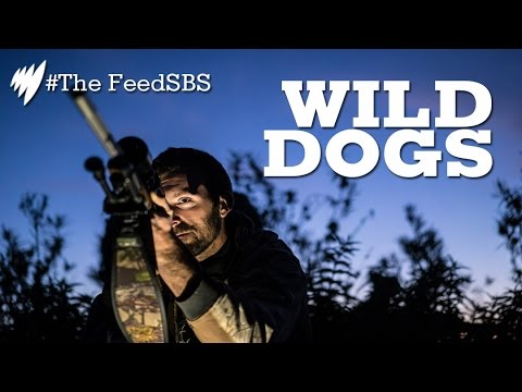 Wild Dogs I The Feed