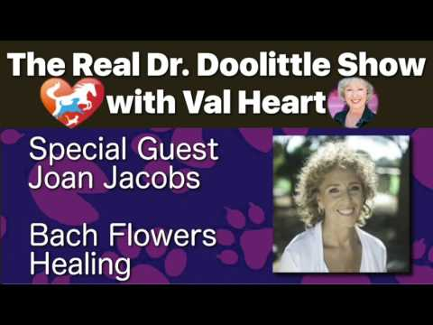 Bach Flowers Healing with Joan Jacobs   The Real Dr. Doolittle Show™   Animal Talk   Podcast #89