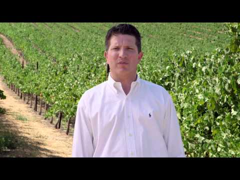 Discover California Wines: Lake County and Sierra Foothills