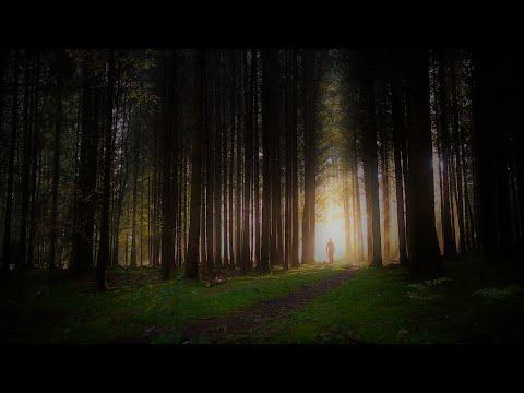 Die Rückkehr, ein Neubeginn - Vanessa Blank