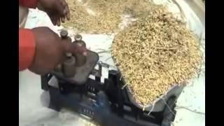 Cara Budidaya Tanaman Padi Gogo Dengan Memakai Pupuk Nasa 081327504507