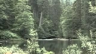 Le sette magnifiche foreste