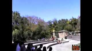 Fantastic Eagle Show - Jungle Park Tenerife