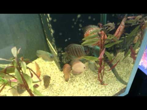 Natural Looking Discus Breeding Pole/cone