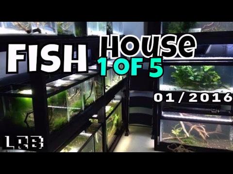 L.R.Bretz Aquatics: Main Fishroom and Office January 31, 2016