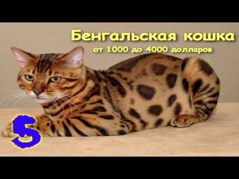 Самые дорогие животные в мире фото, Топ 10 Самые дорогие