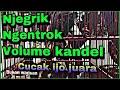 Burung Cucak Ijo Gacor Full Isian Di Jemur Dekat Pentol Malah Gacor Owor Owor Banyak Suara Isian  Mp3 - Mp4 Download