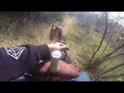 GoPro || Horseback riding
