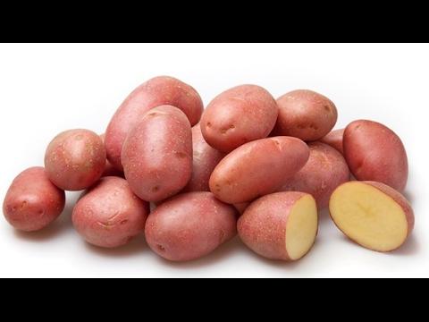 Картофель сорта бородянский розовый