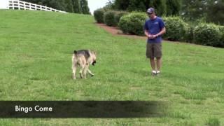 Alpha Dog Training Ga - Bingo