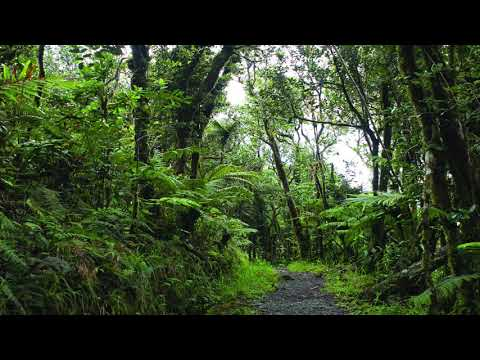 Relaxing Sounds Of El Yunque National Forest (Puerto Rico) - New Version! High Quality 10 Hour Audio