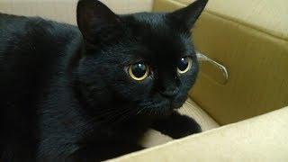 Кошачьи игры иногда бывают для нас опасными! Злая кошка :)