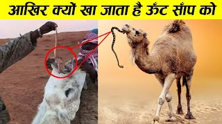 आखिर ज़िंदा सांप क्यों खा जाता है ऊँठ why camel eat snake ! Camel facts ! Earth Adventure in Hindi