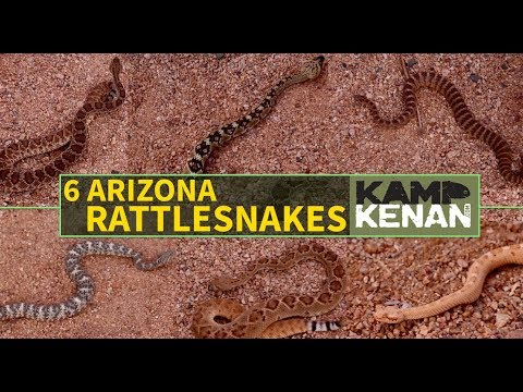 6 Most Common Rattlesnakes of Arizona