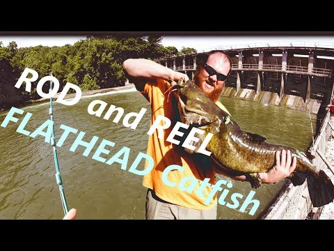 How To Catch Flathead Catfish At A Lake Dam Using Bluegill As Bait!