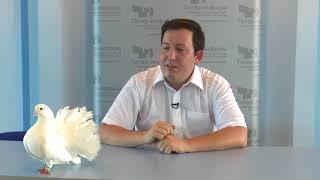 Интервью с заводчиком голубей Тимуром Яшковым