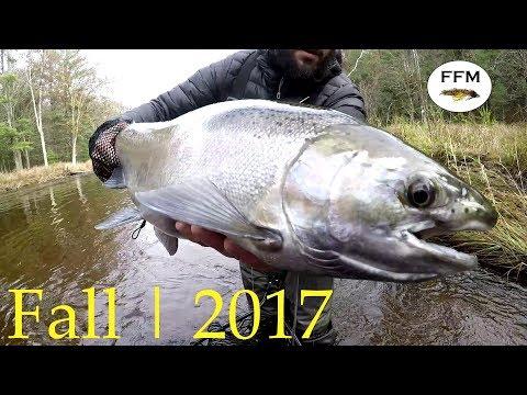 Steelhead Fishing Michigan Fall 2017 - Fly Fish The Mitt