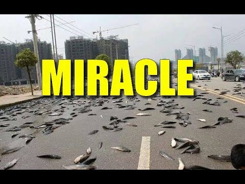 PLUIE D ANIMAUX MIRACLE DE DIEU OU EFFET DE TORNADE PHENOMENE  D APESANTEUR ?!?! PREUVES ET DEBAT