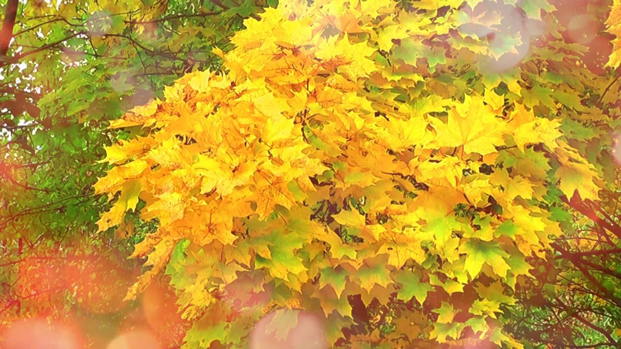 Золотая осень картинки листья