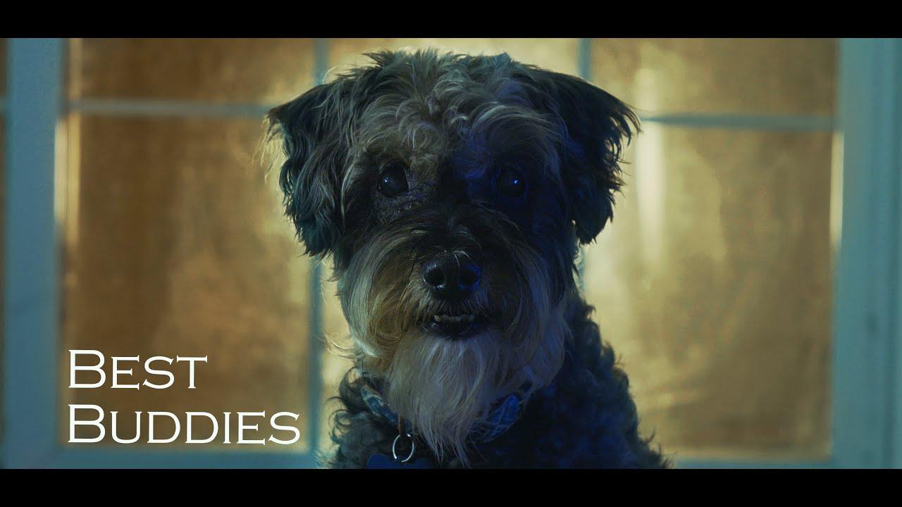Best Buddies - My RØDE Reel 2020