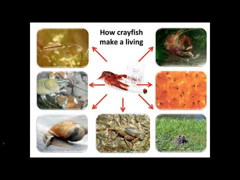 The Pacific Northwest As An Emerging Beachhead Of Crayfish Invasions