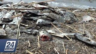 Специалисты выяснили причину замора рыбы в Северном Казахстане