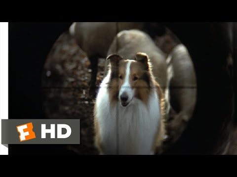 Lassie 89 Movie   They Are Not Your Sheep 1994 HD
