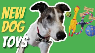 Greyhounds New Dog Toys