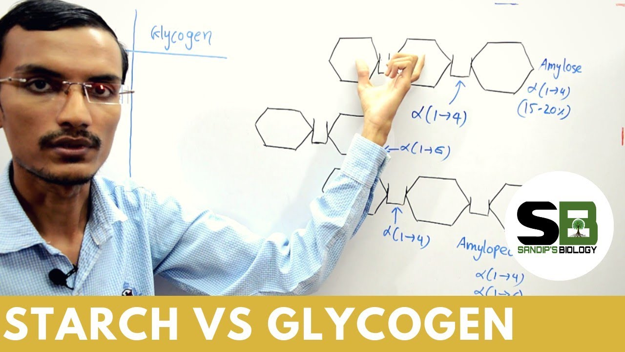 Starch Vs Glycogen Youtube