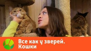 Все как у зверей. Кошки | Живая Планета(Все люди делятся на тех, кто больше любит собак и тех, кто больше любит кошек, а так же тех, кто предпочитает..., 2017-01-27T08:00:30.000Z)