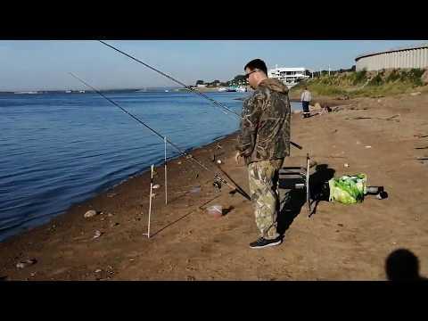 Рыбалка. амурский сазан