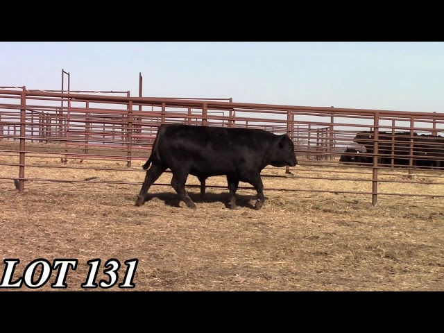 Mead Angus Farms Lot 131