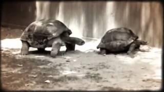 Tortoise porn Fort Wayne Children's Zoo