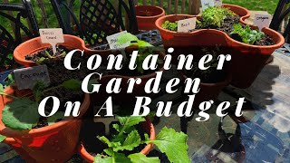 Container Gardening On A Budget | Dollar Tree