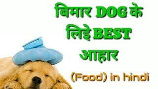 Dog best diet food in Hindi | Bimar dog ke liye best food ||Best Food for Sick Dogs