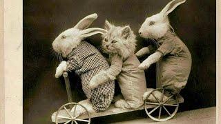 Тра-та-та, тра-та-та, мы везем с собой кота...!