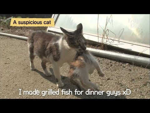Cat Adopts Abandoned Kittens LOL | SBS Animal