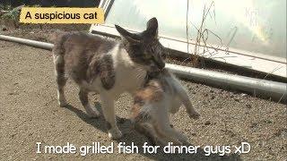 Cat Adopts Abandoned Kittens LOL   Kritter Klub