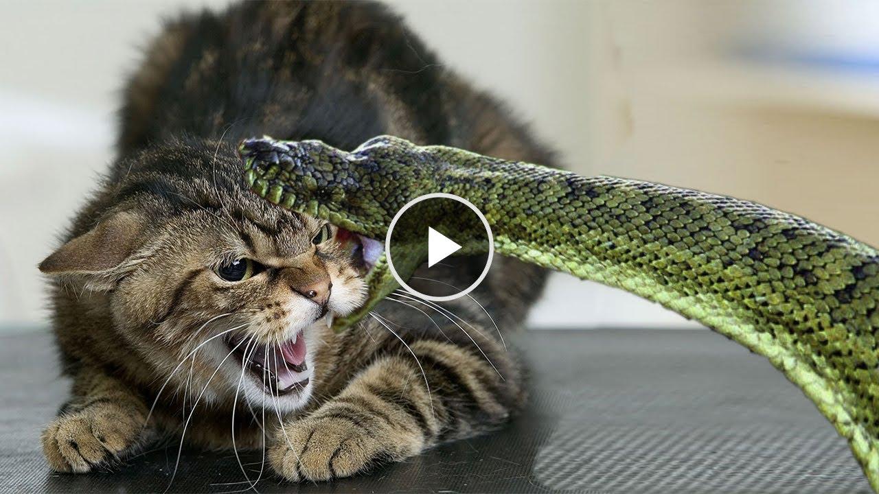 Змеи против домашних животных! КЛОНДАЙК ТВ