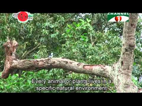 Nature and Life   Episode 49 Protected Areas of Bangladesh