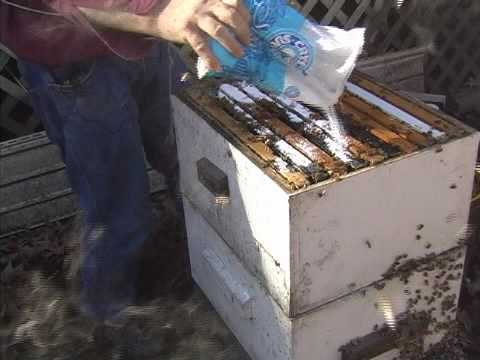 Sugar Dusting for Hive Beetles mpg